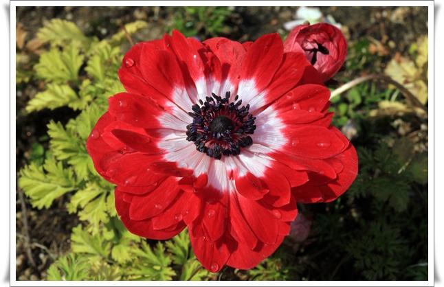 blog 1000flowers