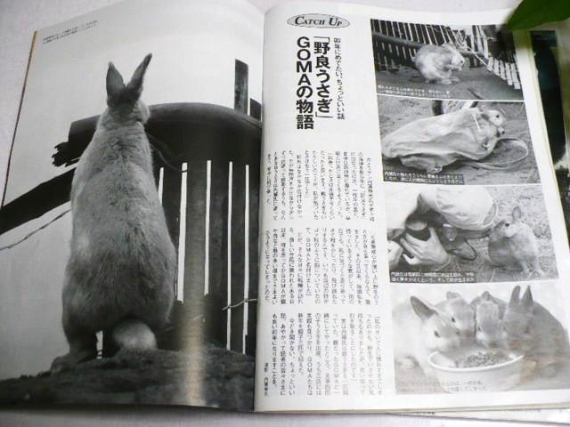 GOMA 茅ヶ崎のうさぎちゃん