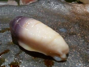 ホッキ貝2