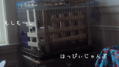 DSC08537_convert_20110418064933.jpg