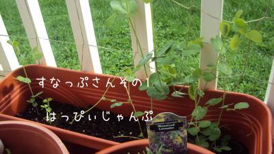 DSC09776_convert_20110513015209.jpg