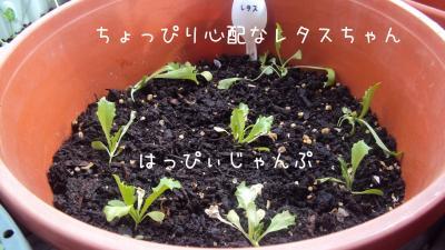 DSC09778_convert_20110513015307.jpg