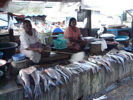 ミャンマー42℃の魚屋さん