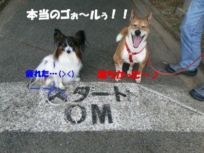 7.2キロ歩いたよ(^_-)