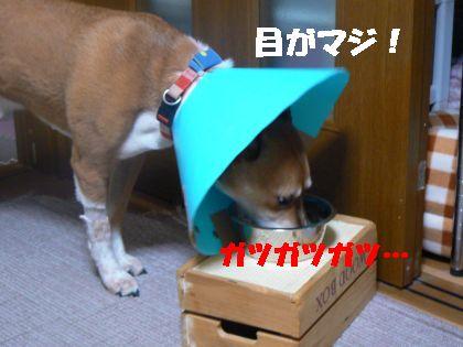 ご飯もOK!