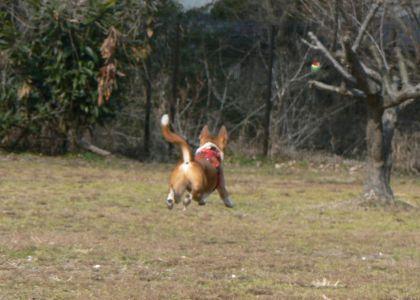 飛行犬 ポチ