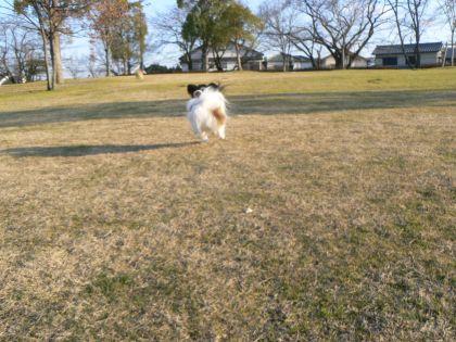 飛行犬テト