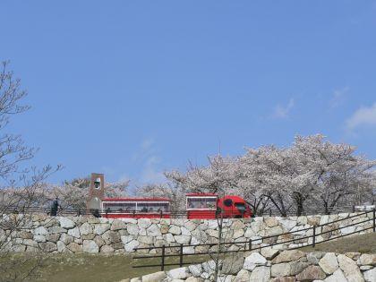桜とてんとう虫バス