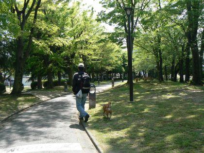 緑道を歩くポチと父ちゃん
