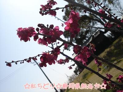 999DSC04105s.jpg