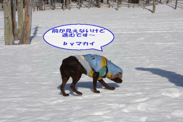 2011_02_26_0410.jpg