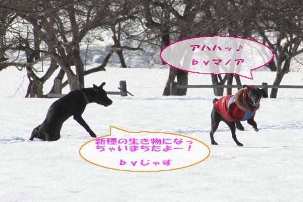 2011_02_26_0421.jpg