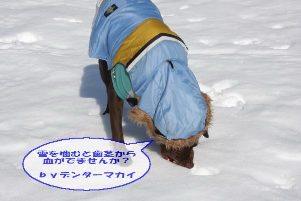 2011_02_26_0459.jpg
