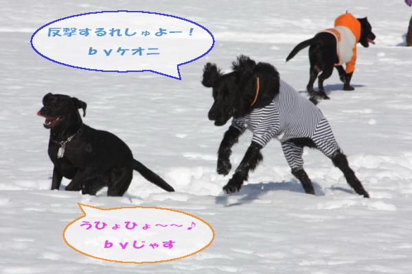2011_02_26_0462.jpg