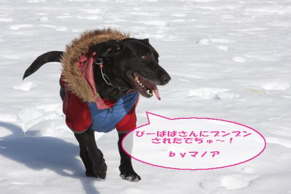 2011_02_26_0470.jpg