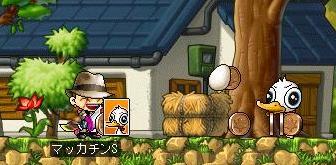 Maple7004a.jpg