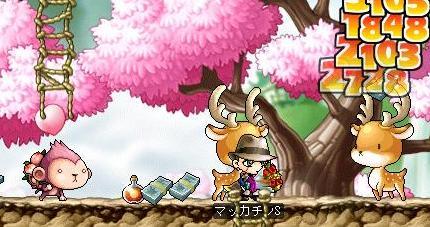 Maple7179a.jpg