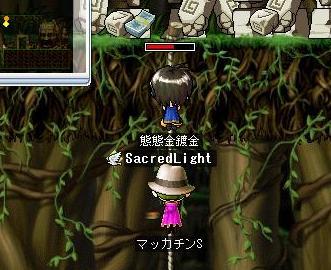 Maple7319a.jpg