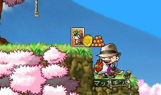 Maple7322a.jpg