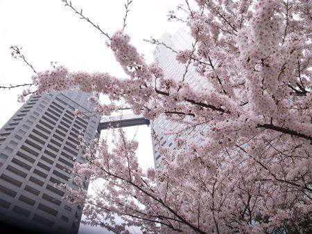 2011年4月11日月曜日 10:13:52