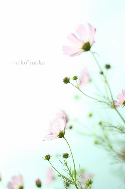 mIMG_0407のコピー