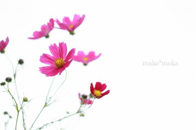 mIMG_0390のコピー