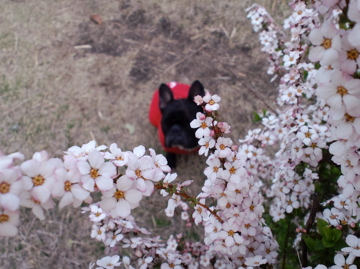 yukiyanagi20122.jpg