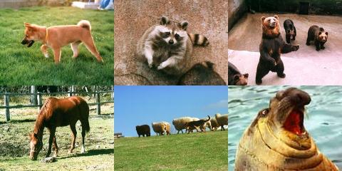 animal01.jpg
