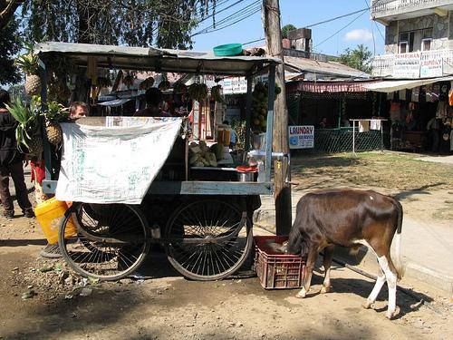 pokhara10.jpg