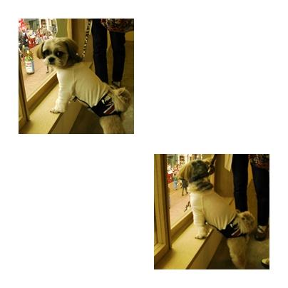 1_20100515223359.jpg