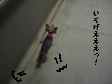 H21.2.21トリミング 018