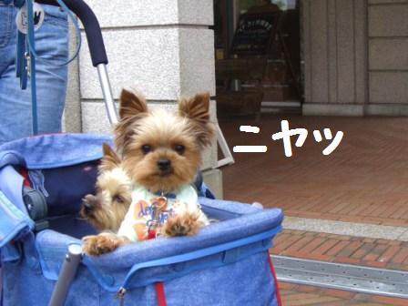 H21.6.7神戸 フラパー 187