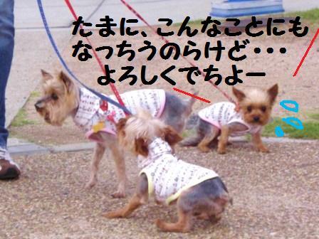 H21.6.28お天気 015