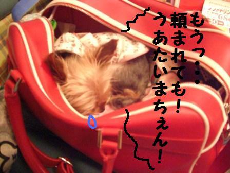 H21.6.28お天気 049