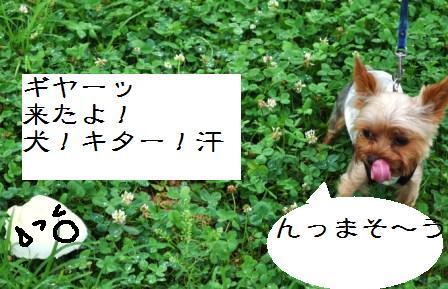 H21.7.25芦屋花火inヨットハーバー 026