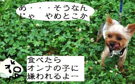 H21.7.25芦屋花火inヨットハーバー 027