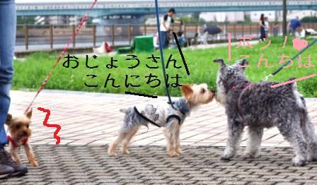 H21.7.25芦屋花火inヨットハーバー 076