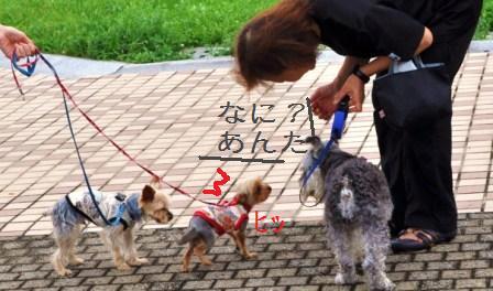 H21.7.25芦屋花火inヨットハーバー 068