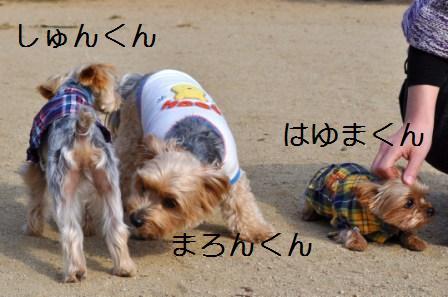 H21.11.8宝塚 060