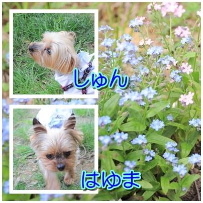6_20100524225309.jpg