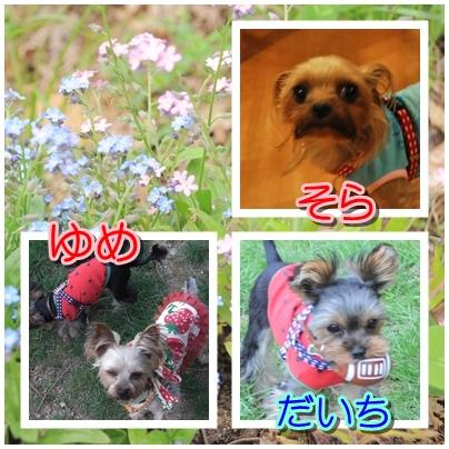 7_20100524225408.jpg