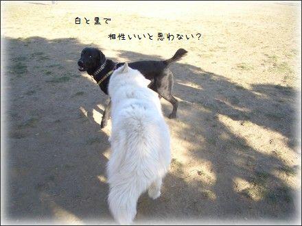 CIMG0046_4.jpg