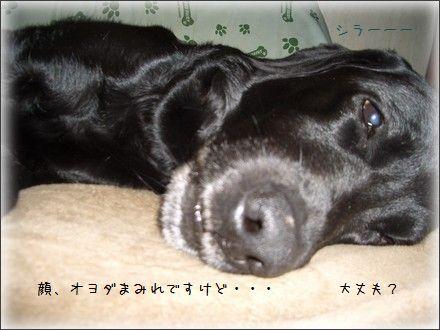 CIMG201002253.jpg