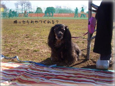 CIMG9889_4.jpg