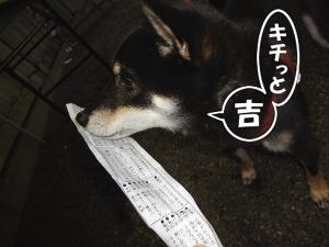 120101_hatsu3.jpg