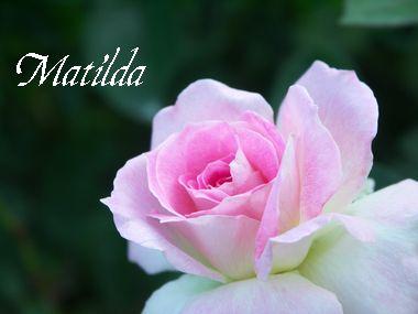 マチルダ sample pic.