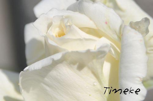 'ティネケ'2009.5.10撮影