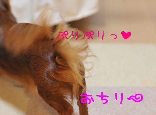 20090618_4.jpg
