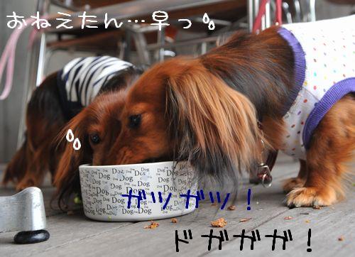 20090705odekake_30.jpg
