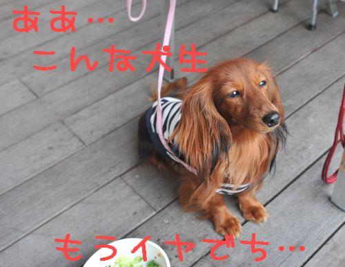 20090705odekake_36.jpg